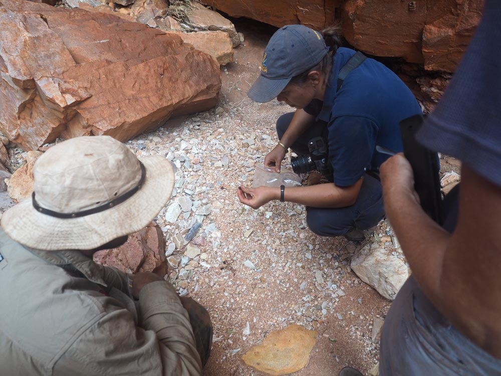 Collecting rock-wallaby scats to take as samples © WWF-Aus / Merril Halley