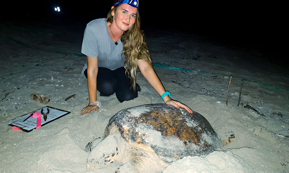Melissa monitoring a hawksbill turtle © Melissa Staines