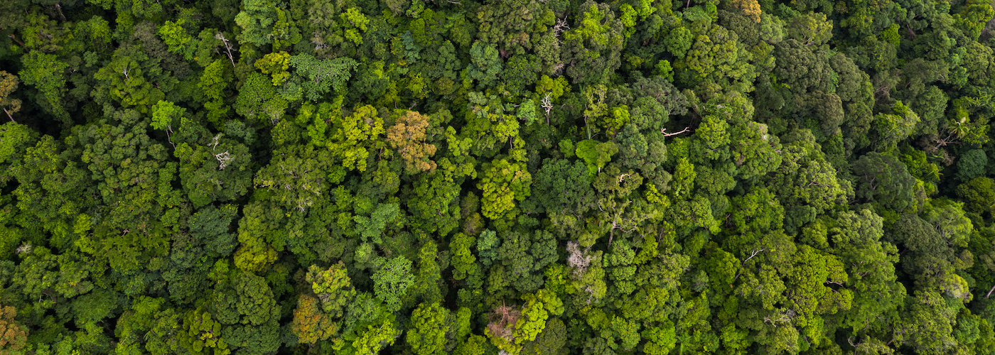 Forests - Background Image © Kalyakan / Adobe Stock / WWF
