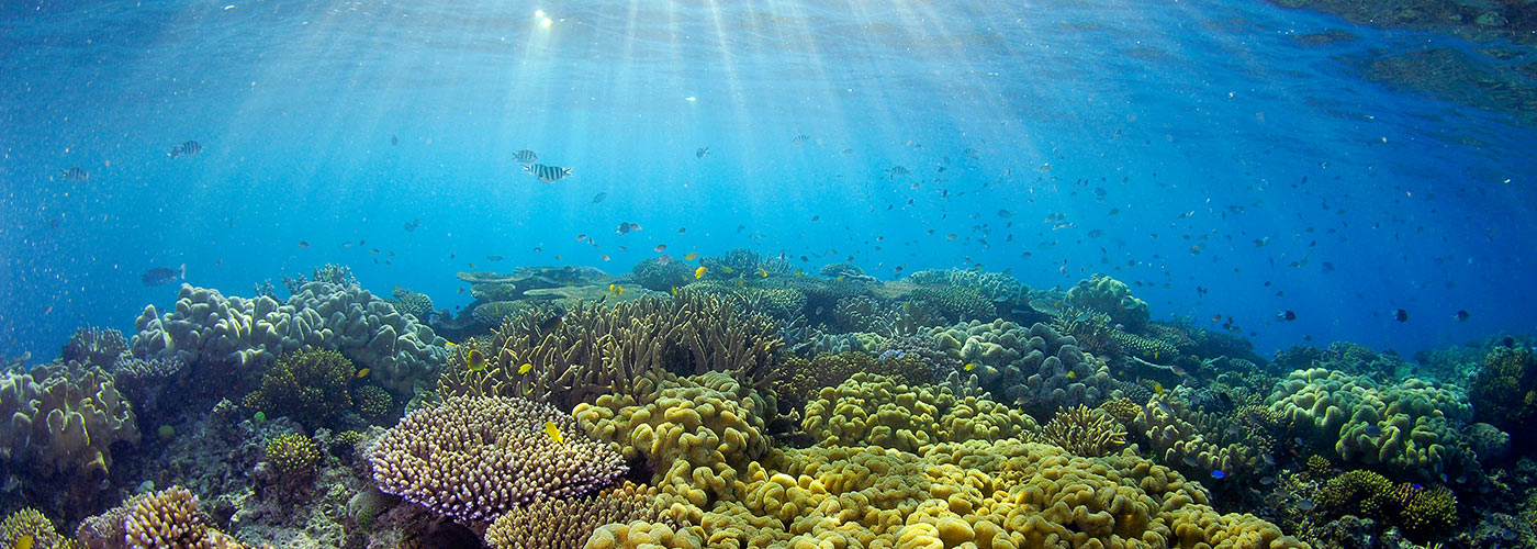 Sunlight illuminates the coral at the Great Barrier Reef © Troy Mayne
