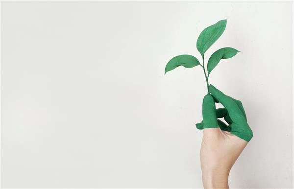 Person Holding Green Leaf Plant 1000px © Sourced on Pexels